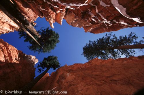 Looking Up On Wall Street Bryce Canyon National Park Utah